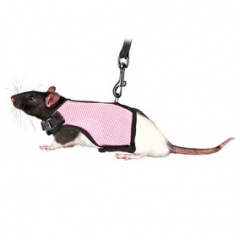61511 TRIXIE Шлейка-жилетка для морской свинки и крысы нейлон
